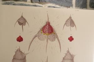 Radiolarians- The Evolutionary Set (35)