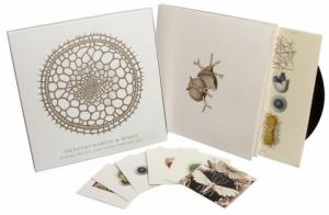 Radiolarians- The Evolutionary Set (Official 3)